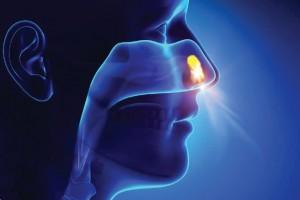 nasal-sinus01
